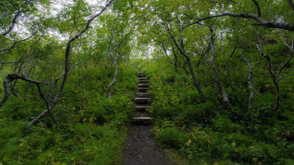 Просто лестница в лесу