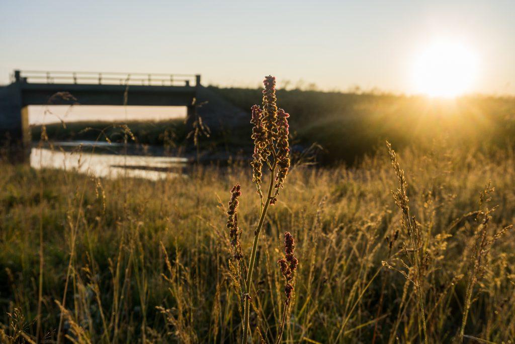 Рассвет под мостом