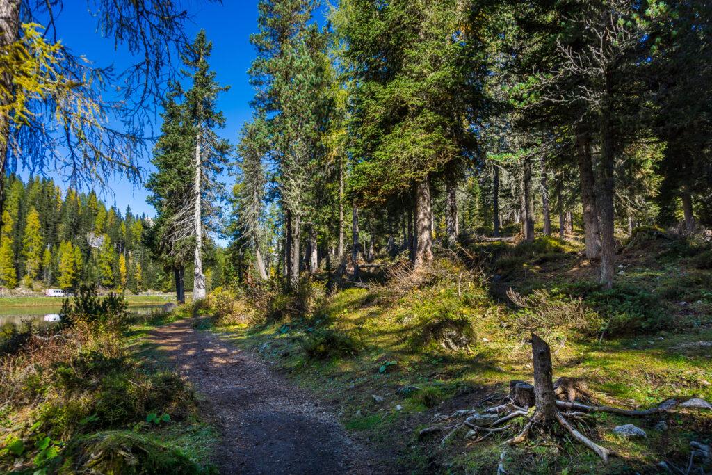 Лес у озера Antorno