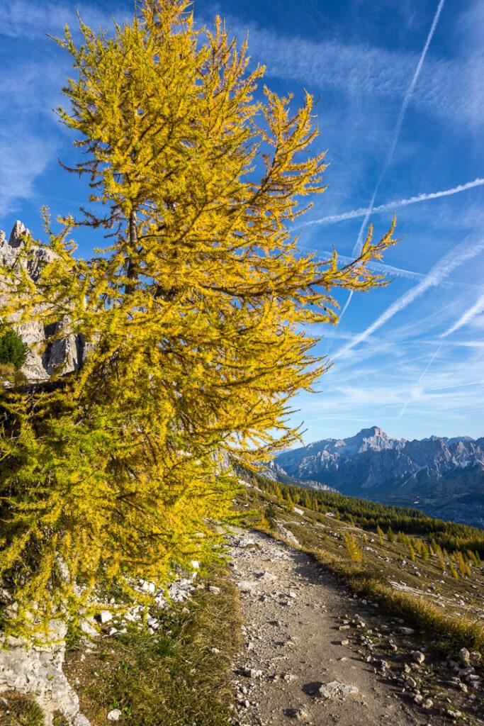 Желтая елка!